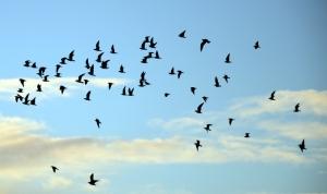 birdsinthesky